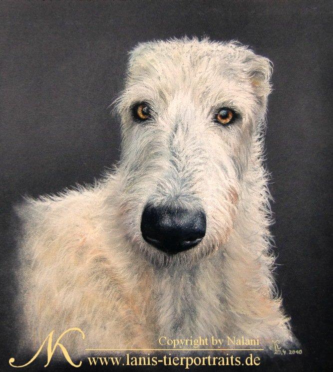 Irish Wolfhound Portrait, Pastellkreide, 40x40cm